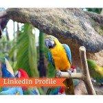 Video nel Profilo LinkedIn