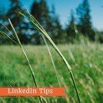 LinkedIn Pulse: 3 cose da sapere